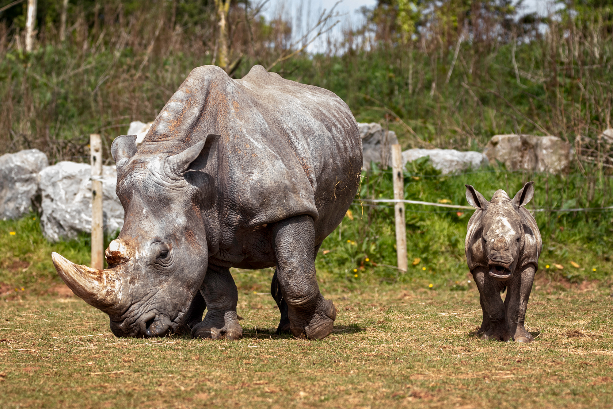 Care For Wild Rhino Orphanage