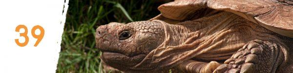 tortoise territory