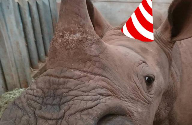 Rhino Rumble - First Birthday Bash!! 2