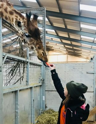 Junior Keeper for the Day - Giraffe Feeding