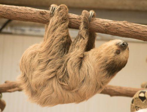 "Come ""Hang"" with Stanley at Safari Zoo"