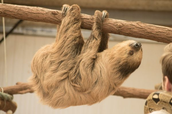 "Come ""Hang"" with Stanley at Safari Zoo"