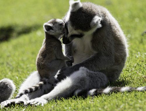 Zoo-Noo-Born-z