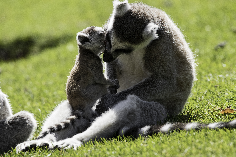 Zoo-Noo-Borns 2
