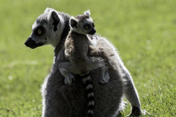 Zoo-Noo-Borns 4