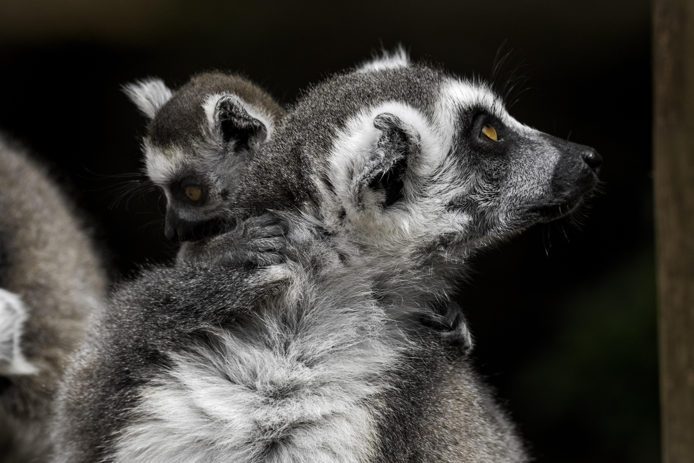 Zoo-Noo-Borns 5