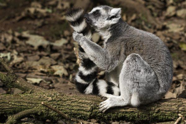 Zoo-Noo-Borns