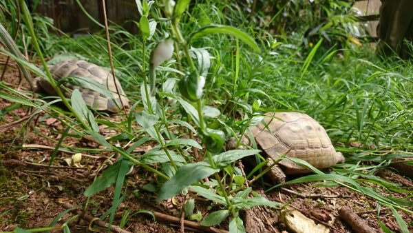 Tortoise Balmoral! 1