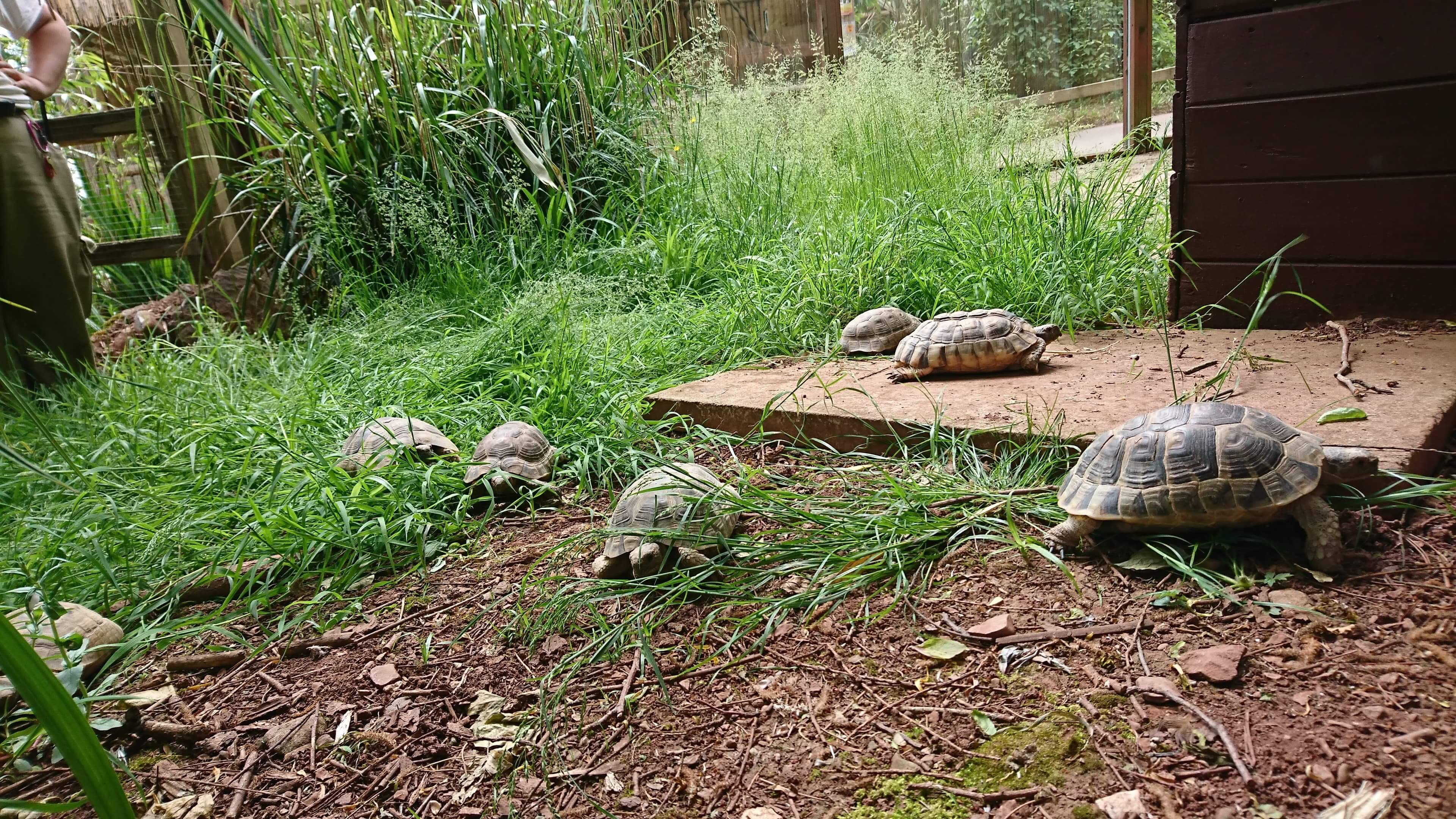 Tortoise Balmoral! 3