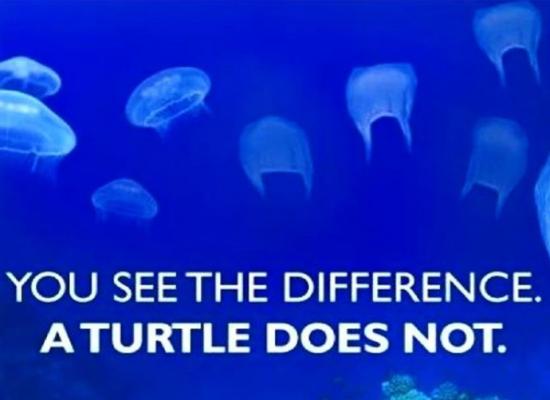 World Oceans Day 2018 6