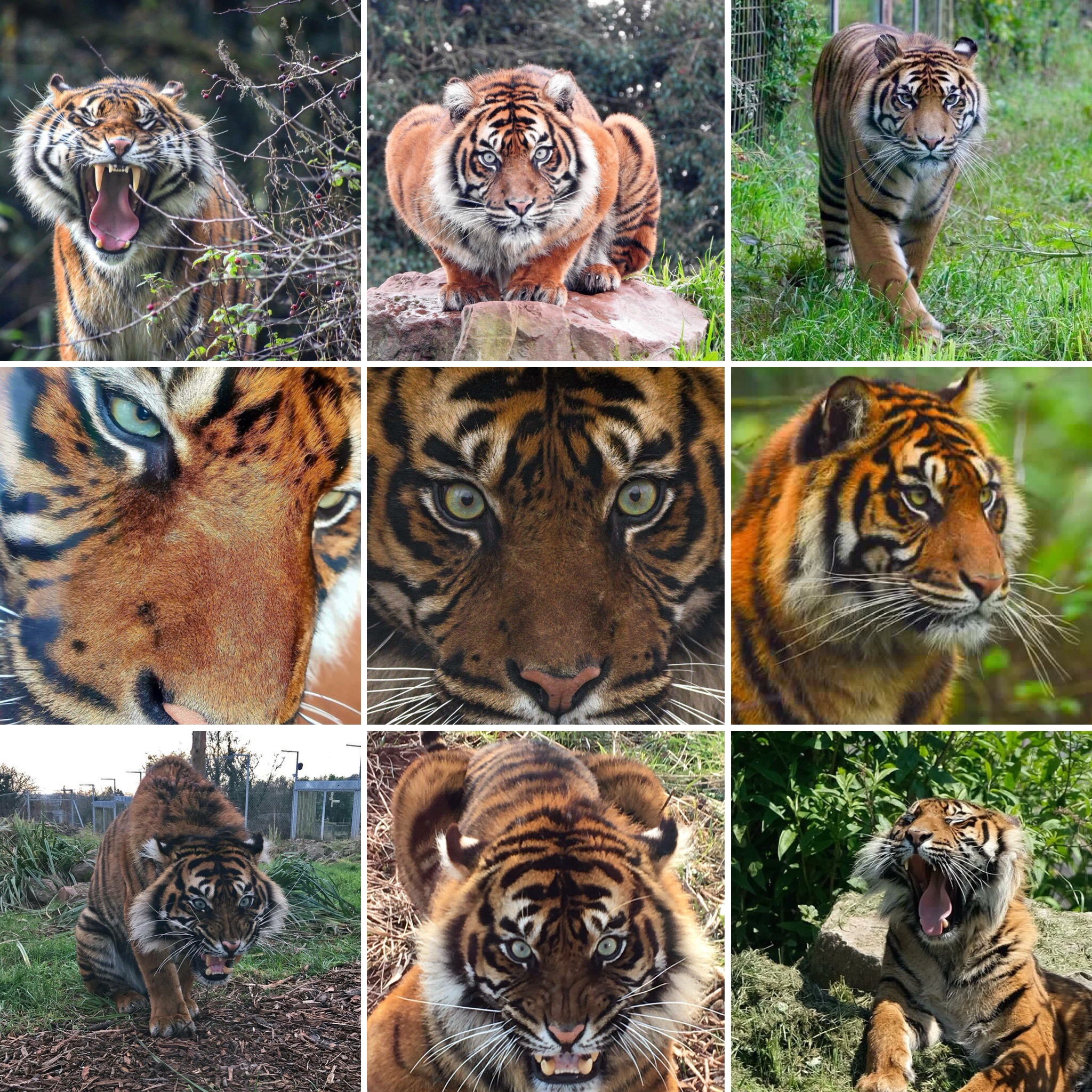 International Tiger Day 2018