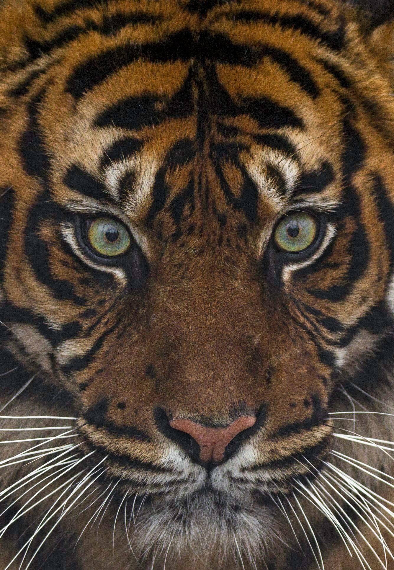 International Tiger Day 2018 8