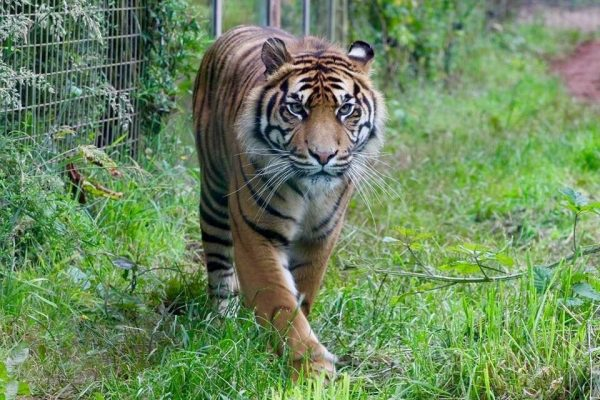 International Tiger Day 2018 12