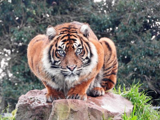 International Tiger Day 2018 13