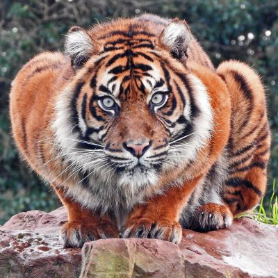 International Tiger Day 2018 14