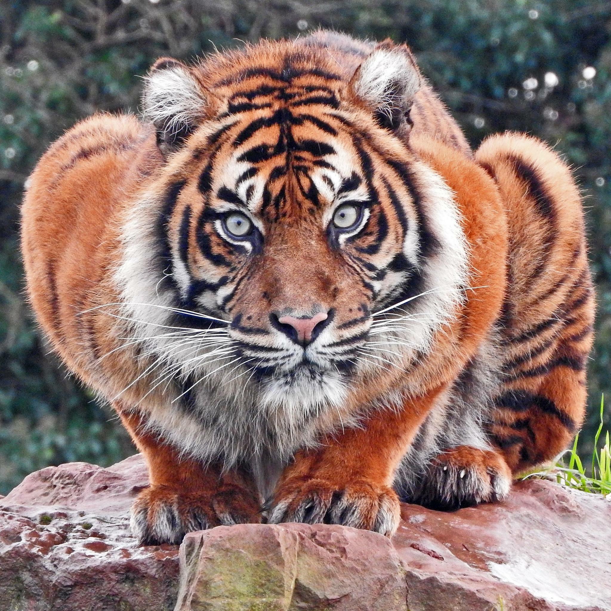 International Tiger Day 2018 14