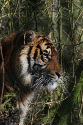 International Tiger Day 2018 17