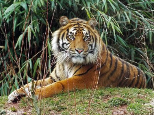 International Tiger Day 2018 3