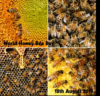 World Honey Bee Day 3
