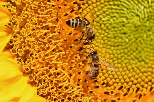 World Honey Bee Day 4