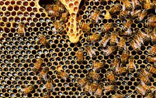 World Honey Bee Day 6