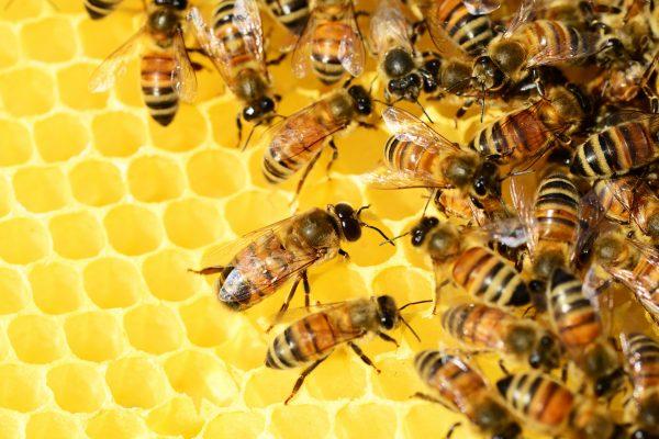 World Honey Bee Day 7