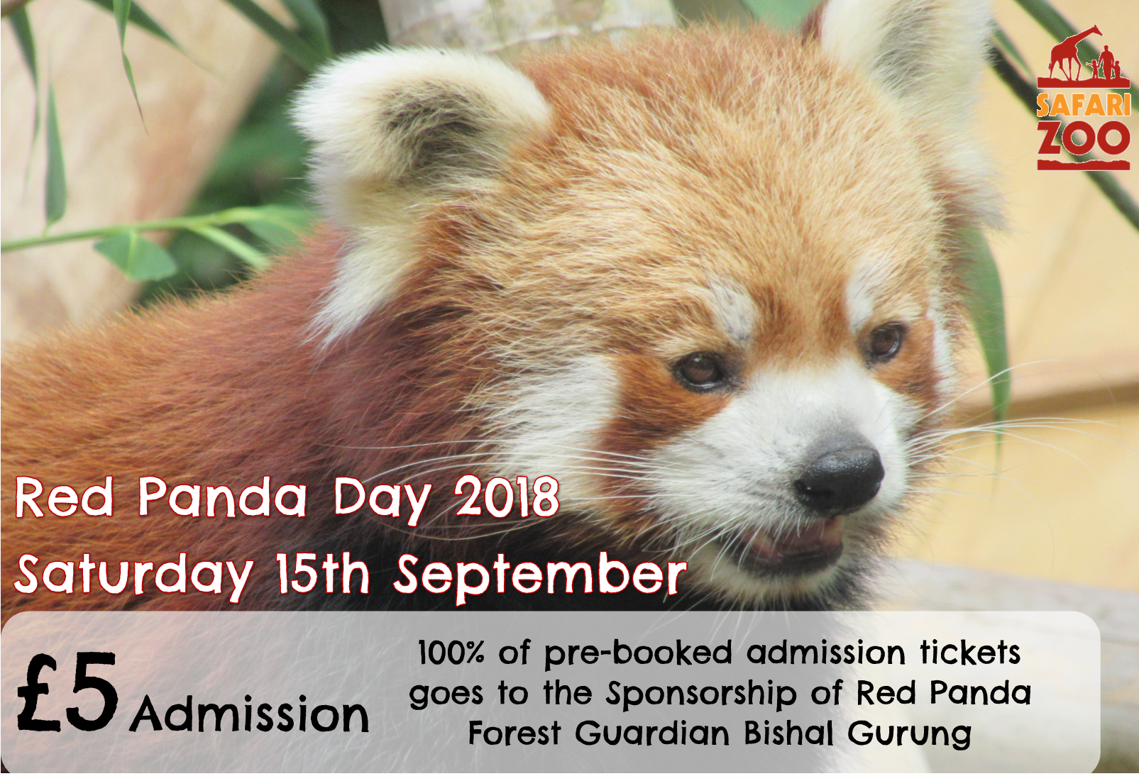 Sponsoring a Red Panda Forest Guardian