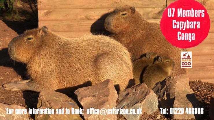 Conga with Capybara