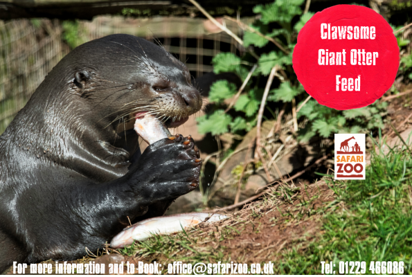 "The ""Claw-some"" Giant Otter Feed 2"