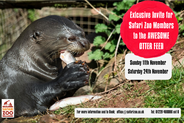 "The ""Claw-some"" Giant Otter Feed"