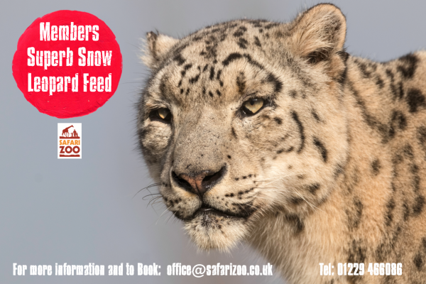 The Super Snow Leopard Feed 1