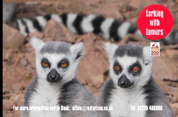 U7 Members: Larking with Lemurs