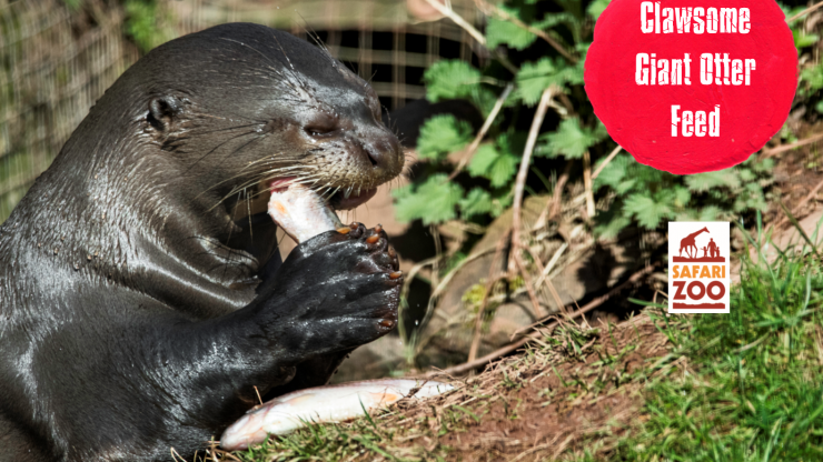 IOSF - International World Otter Day