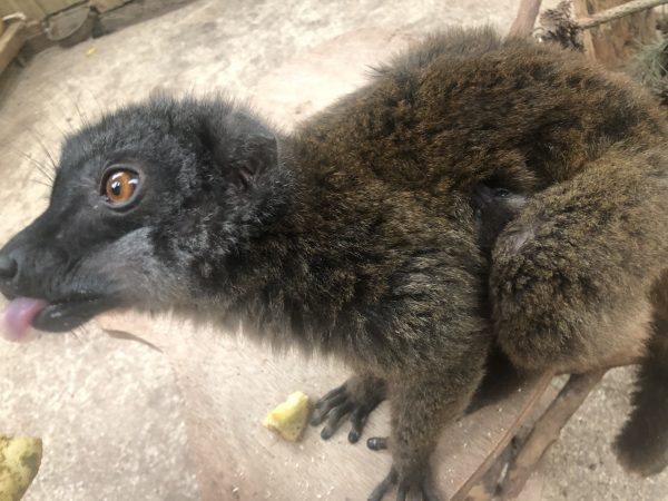 Otter Day, Penguin Chicks and Brown Lemur Babies