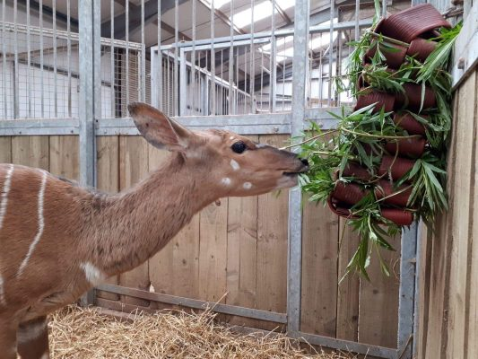 Safari Zoo 2 Years On, and Arthur's Army