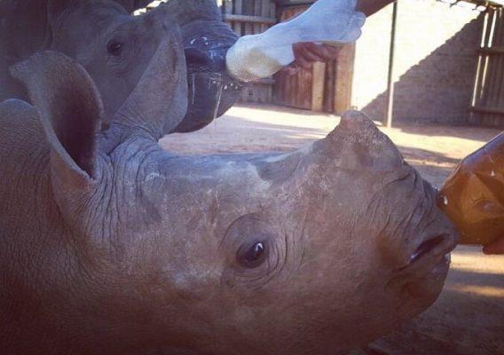 Safari Zoo's Second Aniversary