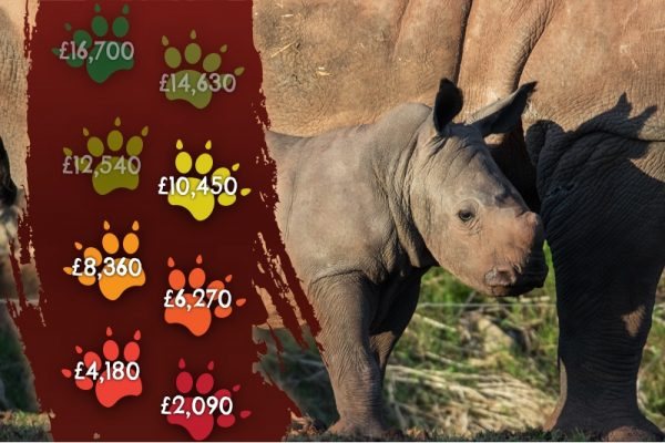 The Wild Rhino Orphanage